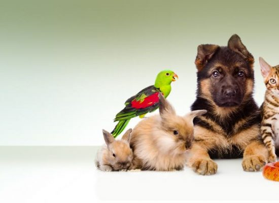 AC per dententori di pappagalli